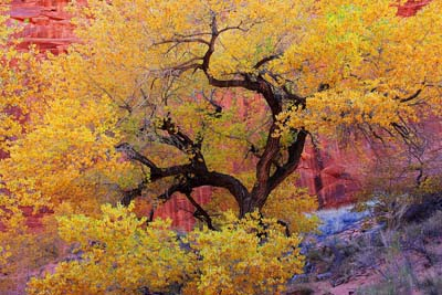 Picture of Autumn in Oak Creek Canyon